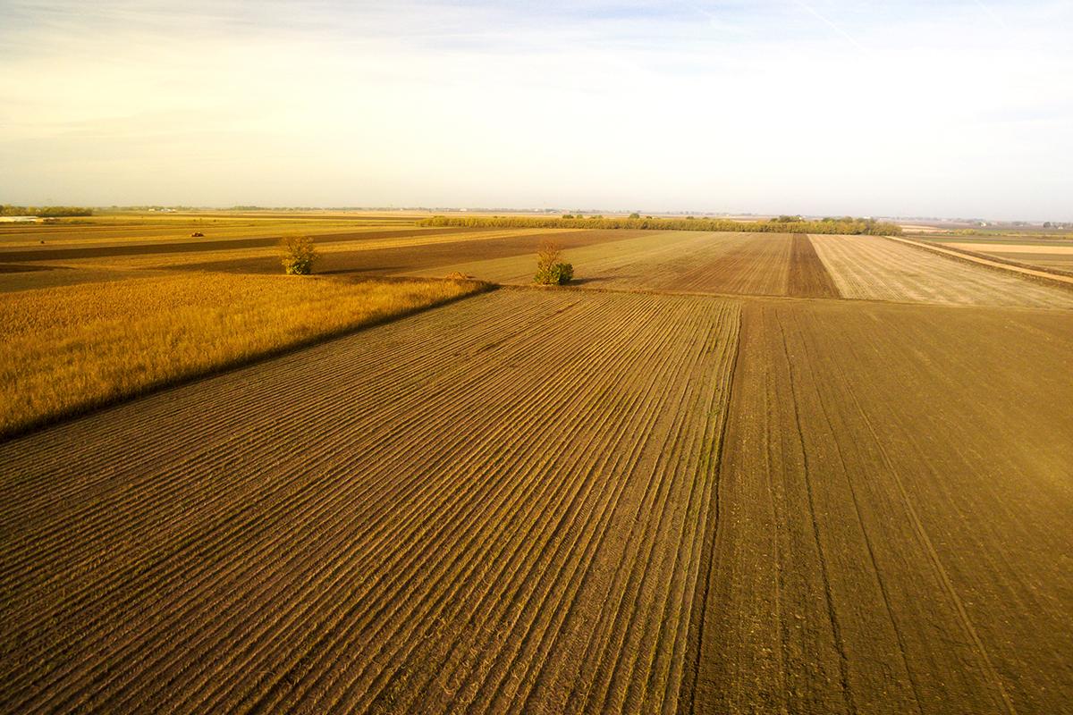Agricultura 4.0: Jungle Concept
